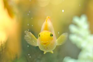 20245752happyyellowfish