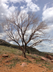 Ah, to be strong from within like the deeply-rooted tree who also reaches toward the sky...