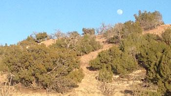 junipers in Santa Fe