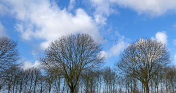 No wonder I love trees without leaves and wide open space - empty feels good to me!