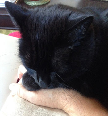 Whenever I need help softening, I connect with this pure love kitty, Jasmine,  who is never far from me!